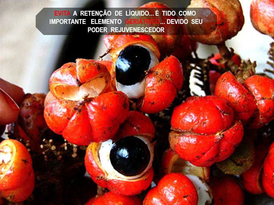 O GUARANÁ DA AMAZÔNIA É O FRUTO DO AMOR... O POMO DE OURO DO JARDIM DAS HESPÉRIDES... A FONTE DA JUVENTUDE... ENERGÉTICO NATURAL... TÔNICO DOS MÚSCULO