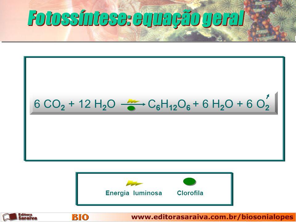 ClorofilaEnergia luminosa 6 CO 2 + 12 H 2 O C 6 H 12 O 6 + 6 H 2 O + 6 O 2