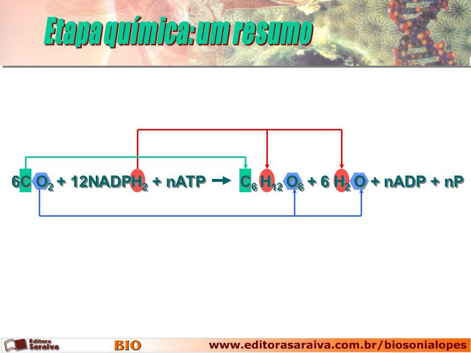 6C O 2 + 12NADPH 2 + nATP C 6 H 12 O 6 + 6 H 2 O + nADP + nP