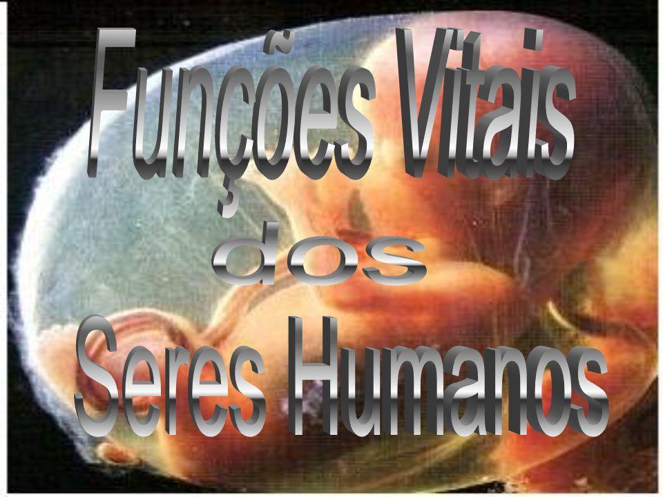 Bibliografia http://www.coladaweb.com/biologia/humana.htm FONTES: UFSM, Base de dados do Portal Brasil e Os seres vivos .