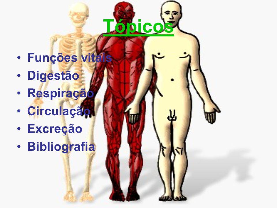 As funções vitais A função de nutrição é realizada pela incorporação de substâncias úteis (dos alimentos ingeridos) ao organismo.