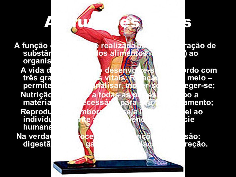 Digestão Processo químico e mecânico, onde ocorre a quebra das moléculas dos nutrientes.