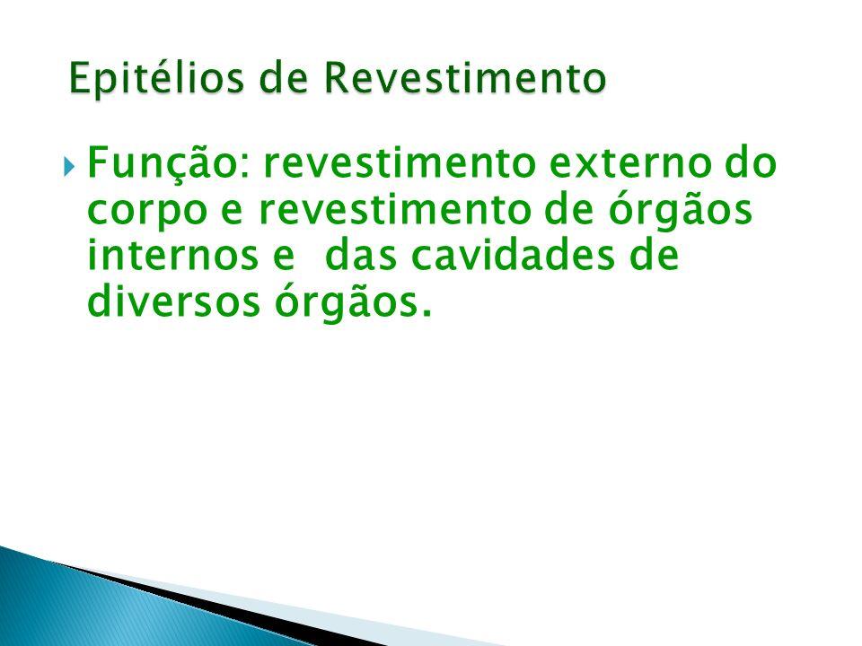Função: revestimento externo do corpo e revestimento de órgãos internos e das cavidades de diversos órgãos.