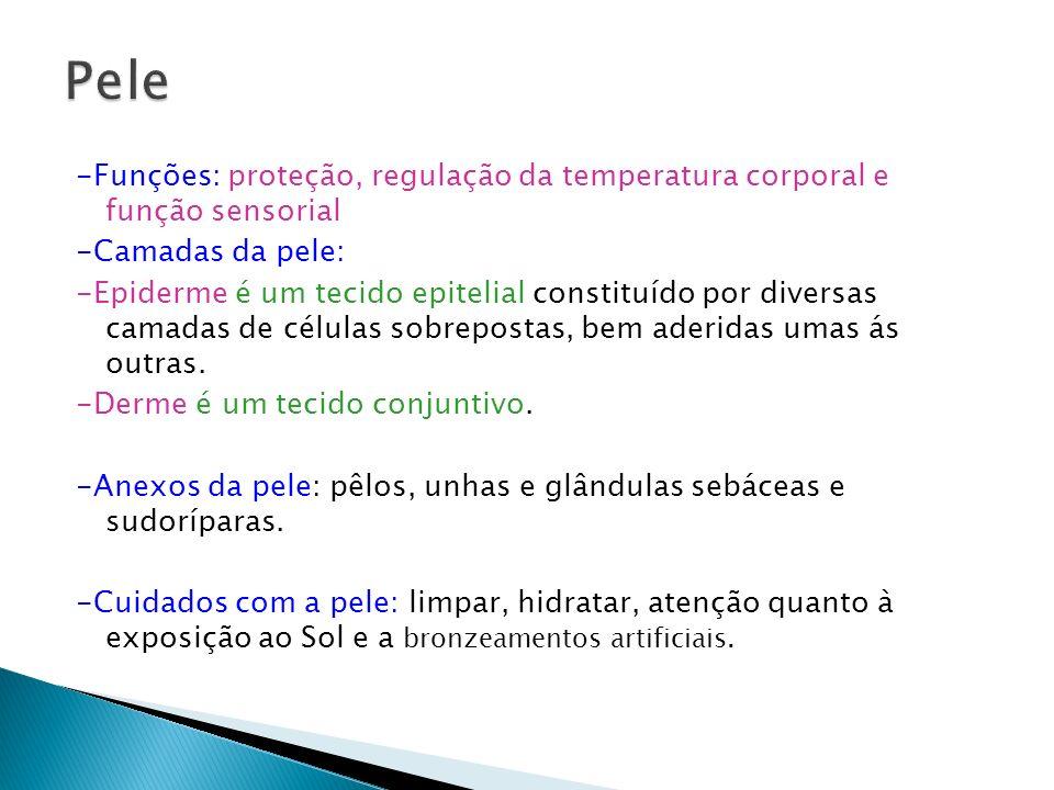 -Funções: proteção, regulação da temperatura corporal e função sensorial -Camadas da pele: -Epiderme é um tecido epitelial constituído por diversas ca