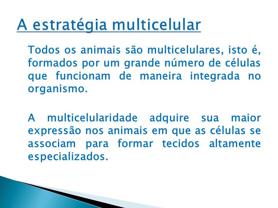 Todos os animais são multicelulares, isto é, formados por um grande número de células que funcionam de maneira integrada no organismo. A multicelulari