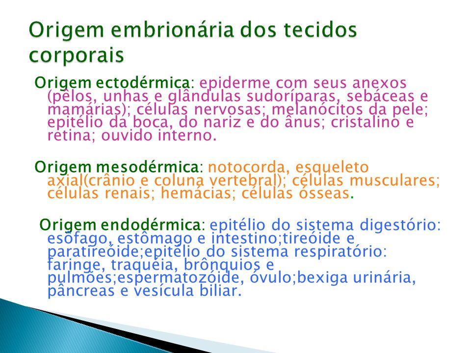 Origem ectodérmica: epiderme com seus anexos (pêlos, unhas e glândulas sudoríparas, sebáceas e mamárias); células nervosas; melanócitos da pele; epité