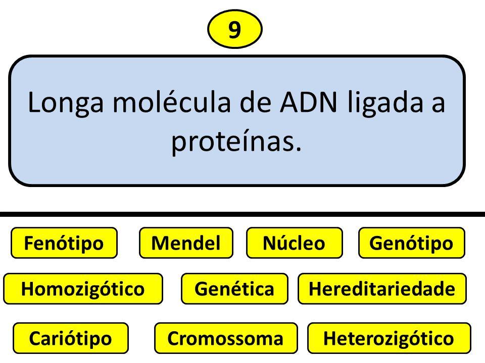 9 Longa molécula de ADN ligada a proteínas. Homozigótico Mendel CariótipoCromossomaHeterozigótico Fenótipo Genética Núcleo Hereditariedade Genótipo