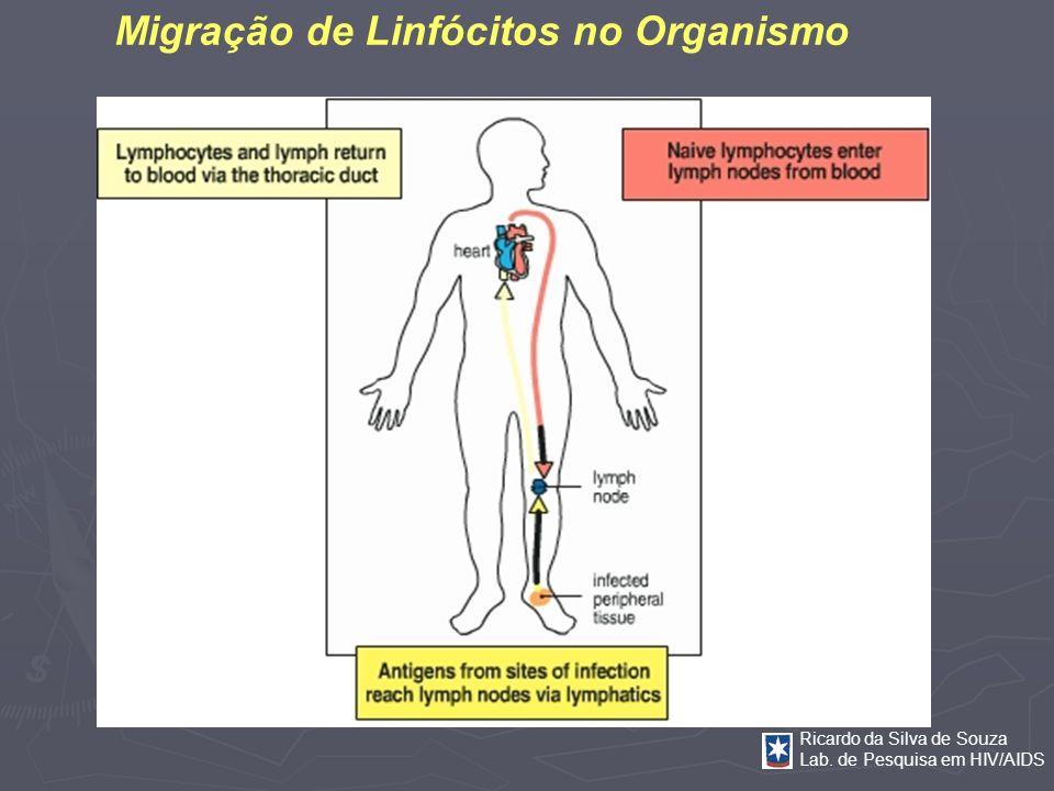 Ricardo da Silva de Souza Lab. de Pesquisa em HIV/AIDS Migração de Linfócitos no Organismo