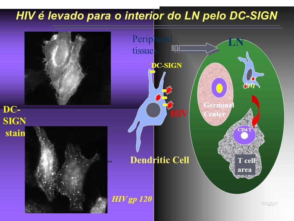 Ricardo da Silva de Souza Lab. de Pesquisa em HIV/AIDS HIV é levado para o interior do LN pelo DC-SIGN Control HIV gp 120 DC- SIGN staining Germinal C