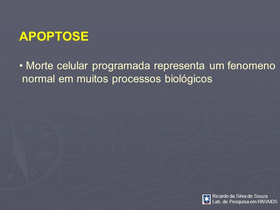 Ricardo da Silva de Souza Lab. de Pesquisa em HIV/AIDS APOPTOSE Morte celular programada representa um fenomeno normal em muitos processos biológicos
