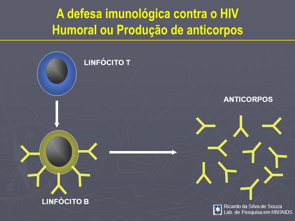Ricardo da Silva de Souza Lab. de Pesquisa em HIV/AIDS LINFÓCITO T LINFÓCITO B ANTICORPOS A defesa imunológica contra o HIV Humoral ou Produção de ant
