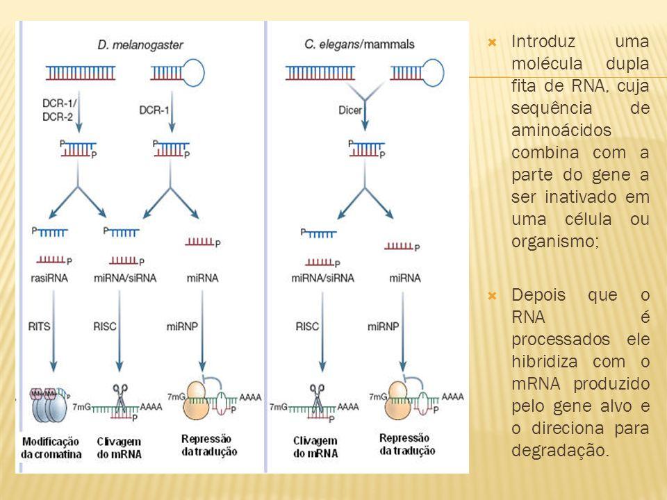Introduz uma molécula dupla fita de RNA, cuja sequência de aminoácidos combina com a parte do gene a ser inativado em uma célula ou organismo; Depois