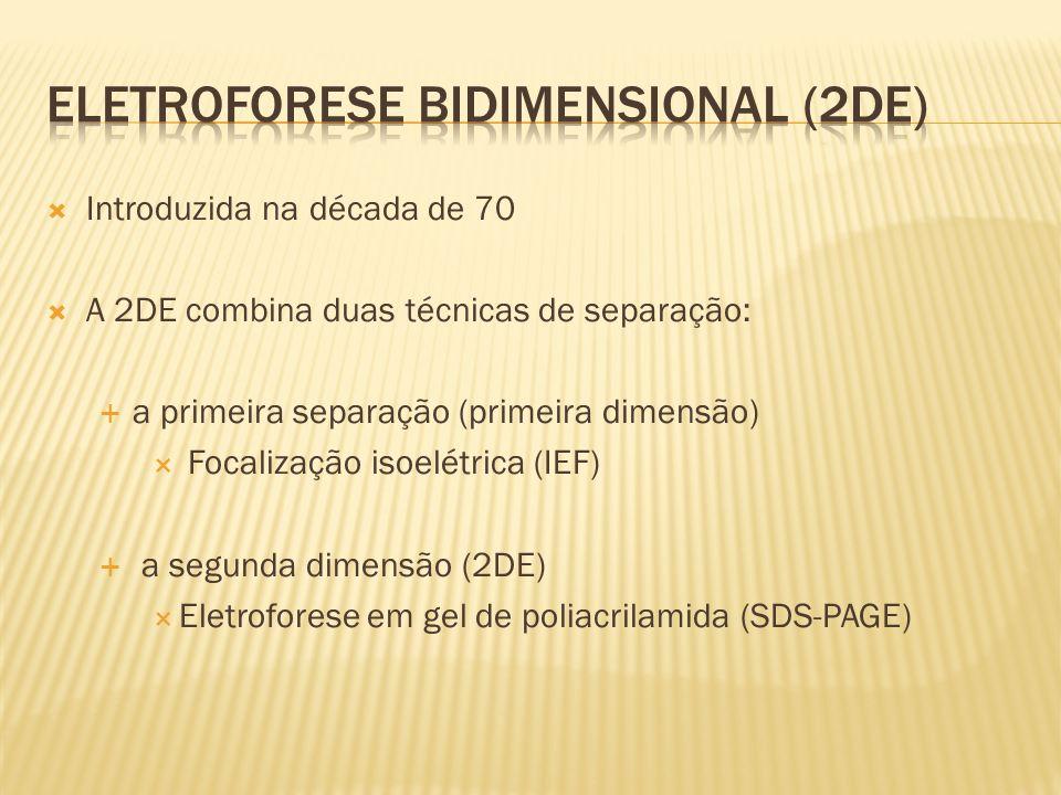 Introduzida na década de 70 A 2DE combina duas técnicas de separação: a primeira separação (primeira dimensão) Focalização isoelétrica (IEF) a segunda