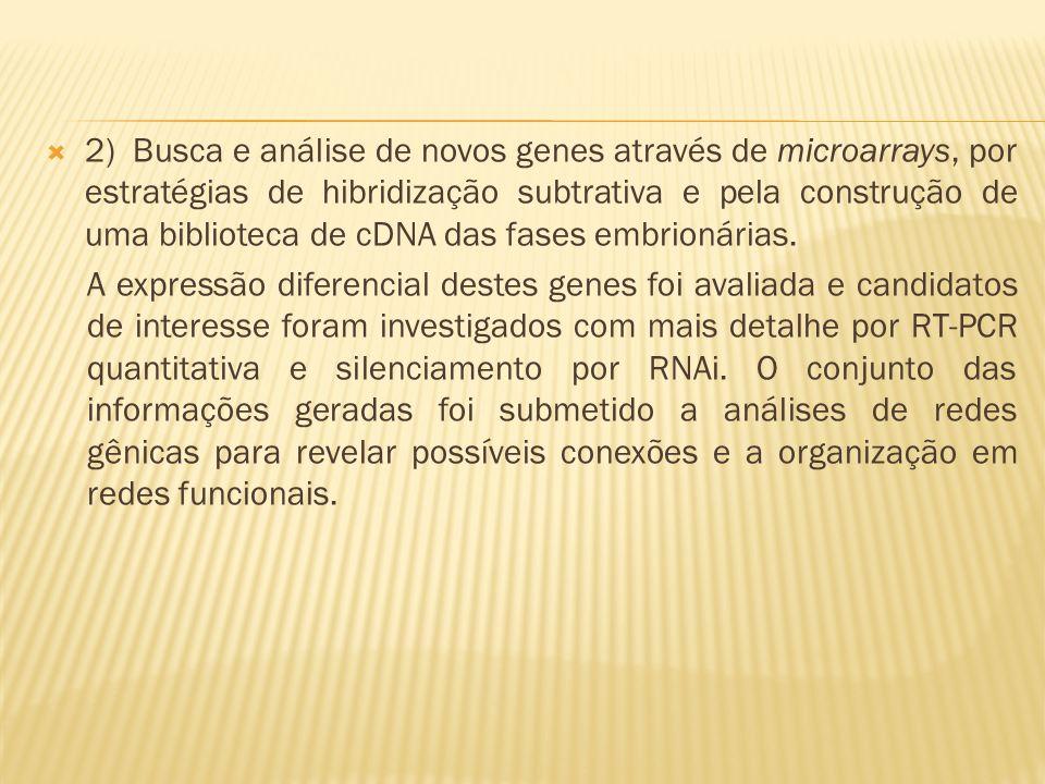 2) Busca e análise de novos genes através de microarrays, por estratégias de hibridização subtrativa e pela construção de uma biblioteca de cDNA das f