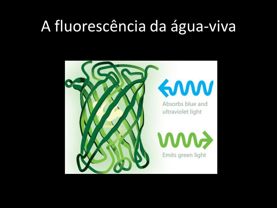 A fluorescência da água-viva