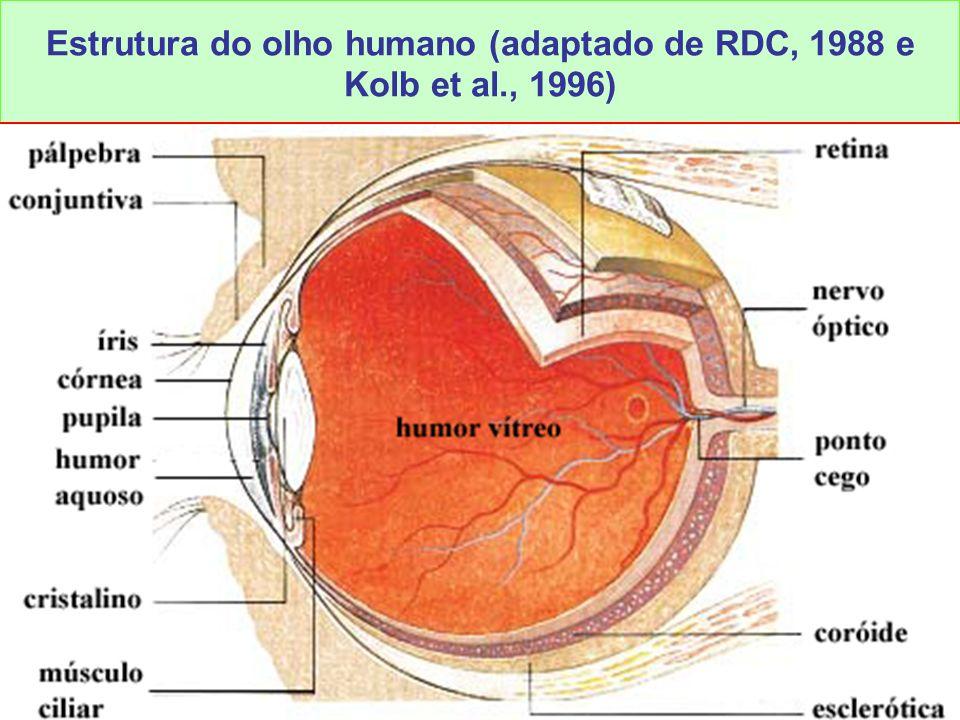 15 LAvFis-2009 Estrutura do olho humano (adaptado de RDC, 1988 e Kolb et al., 1996)