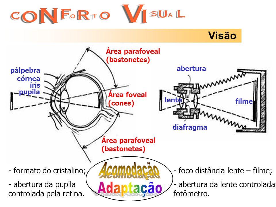 Visão abertura diafragma filme lente pálpebra córnea íris pupila Área foveal (cones) Área parafoveal (bastonetes) Área parafoveal (bastonetes) - foco