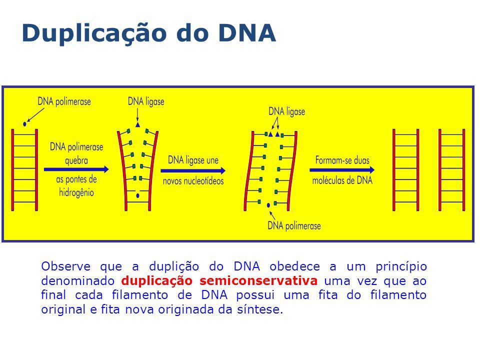 Duplicação do DNA Observe que a duplição do DNA obedece a um princípio denominado duplicação semiconservativa uma vez que ao final cada filamento de DNA possui uma fita do filamento original e fita nova originada da síntese.