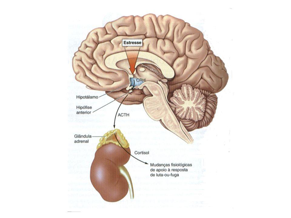 Ajustes Fisiológicos das Emoções A regulação da liberação do ACTH no hipotálamo é extremamente complexa; Sujeita a vários fatores: –Fatores Hipotalâmicos; –Adrenalina e nor-adrenalina (estimulam o ACTH na hipófise) –Vasopressina; O Hipocampo participa do sistema de retroalimentação negativa, no qual altos níveis de glicorticóides inibem a liberação de ACTH.