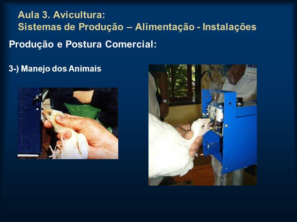 Aula 3. Avicultura: Sistemas de Produção – Alimentação - Instalações Produção e Postura Comercial: 3-) Manejo dos Animais