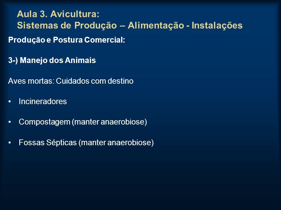 Aula 3. Avicultura: Sistemas de Produção – Alimentação - Instalações Produção e Postura Comercial: 3-) Manejo dos Animais Aves mortas: Cuidados com de