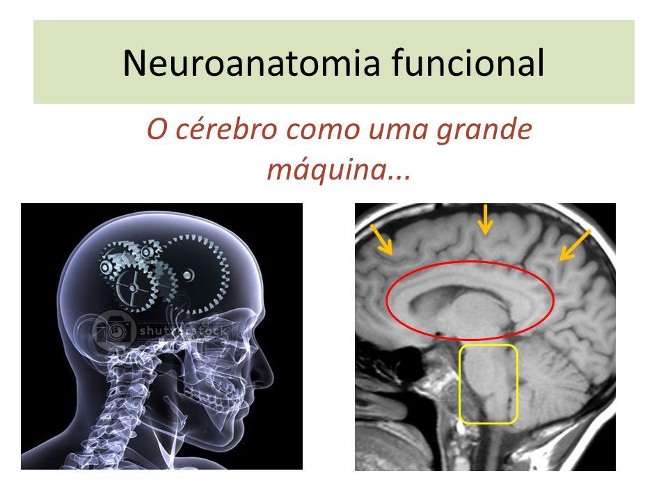 Neuroanatomia funcional O cérebro como uma grande máquina...