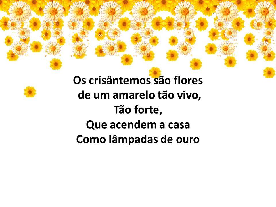 Os crisântemos são flores de um amarelo tão vivo, Tão forte, Que acendem a casa Como lâmpadas de ouro