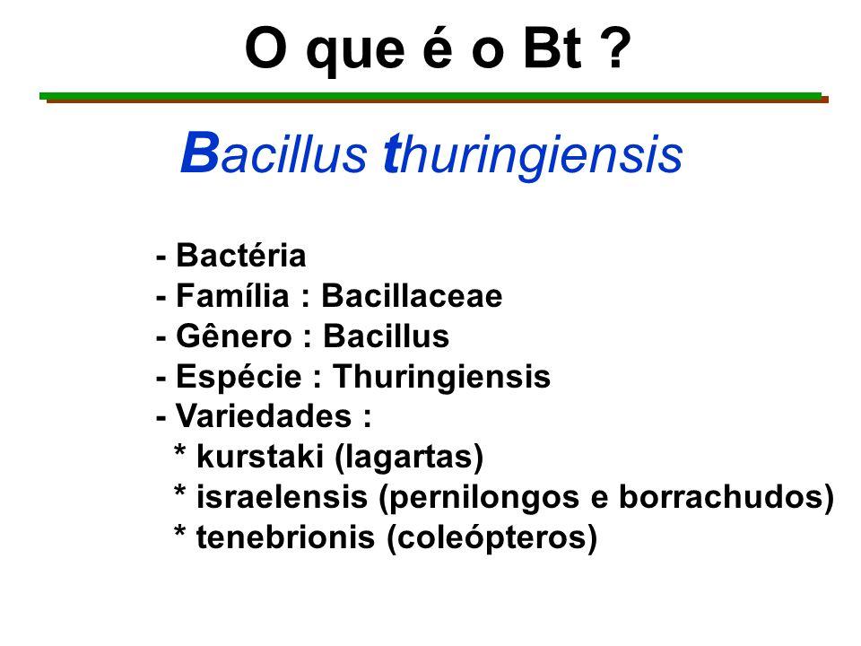 Bacillus thuringiensis kurstaki Produz Inseticida LAGARTICIDA (lagartas)
