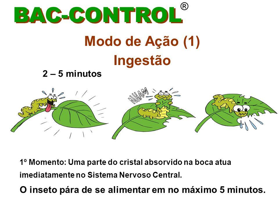 Modo de Ação (2) Ingestão BAC-CONTROL ® 2º Momento : ataca e destrói a parede do tubo digestivo, permitindo o extravasamento do líquido digestivo para dentro do corpo do inseto, provocando uma infecção generalizada matando a lagarta.