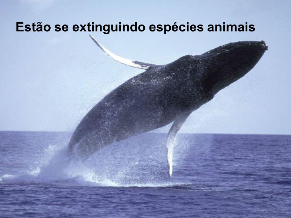 Estão se extinguindo espécies animais