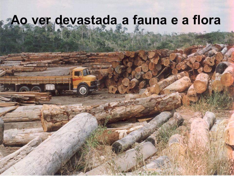 Ao ver devastada a fauna e a flora