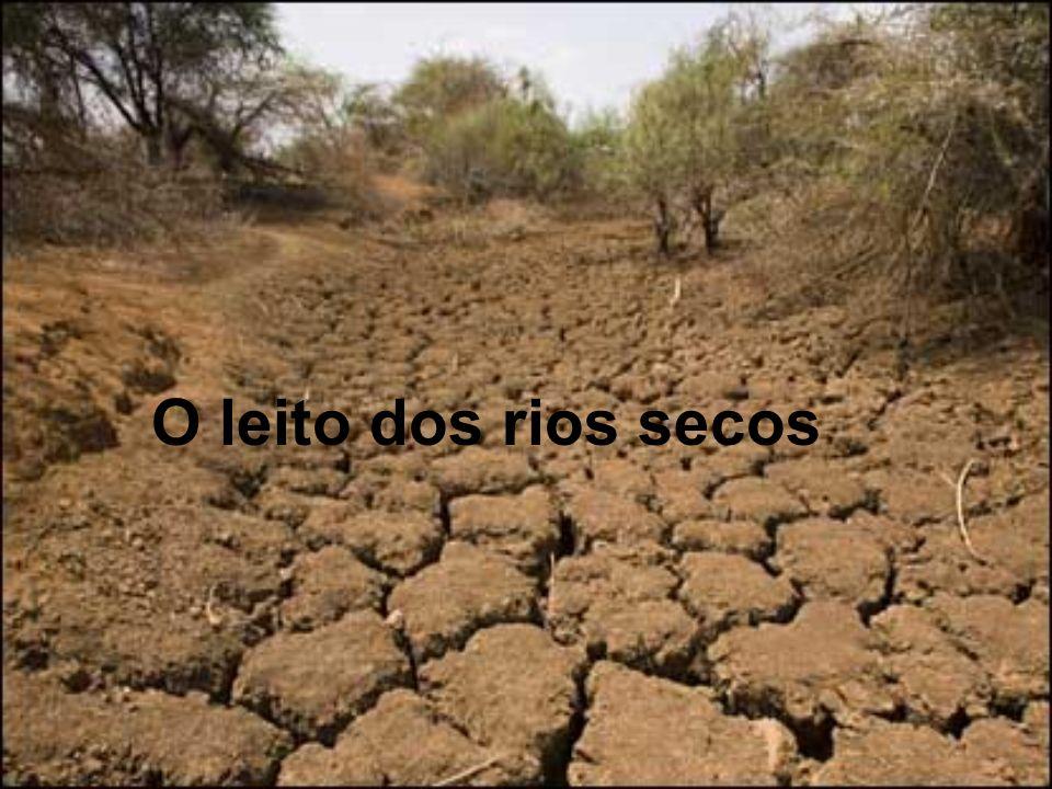 O leito dos rios secos