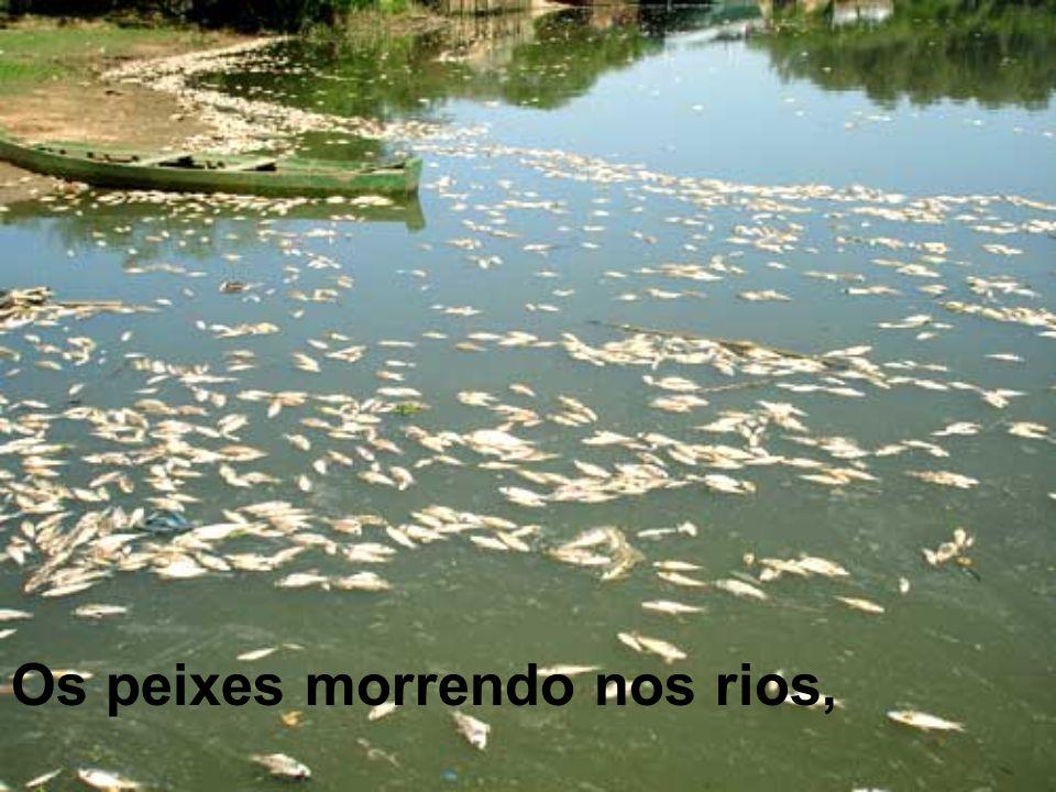 Os peixes morrendo nos rios,