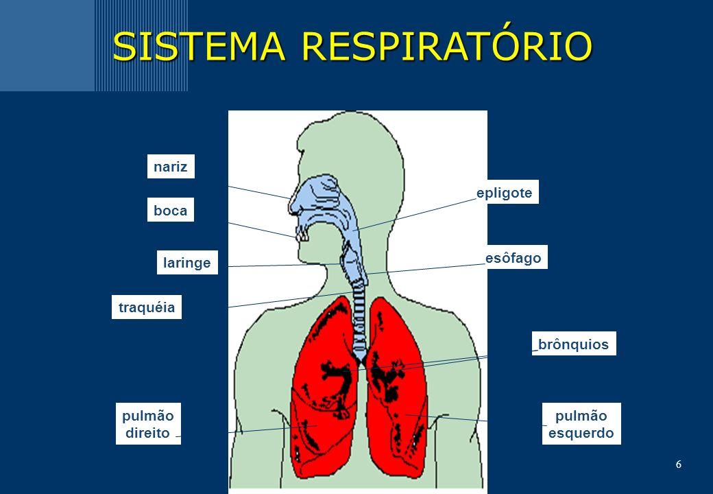 6 nariz boca laringe traquéia pulmão direito pulmão esquerdo brônquios epligote esôfago SISTEMA RESPIRATÓRIO
