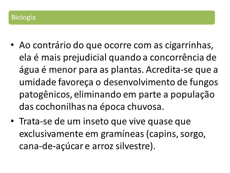 Ao contrário do que ocorre com as cigarrinhas, ela é mais prejudicial quando a concorrência de água é menor para as plantas.