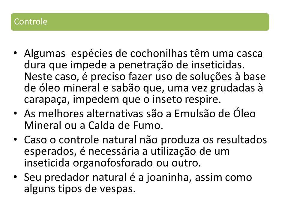 Algumas espécies de cochonilhas têm uma casca dura que impede a penetração de inseticidas.
