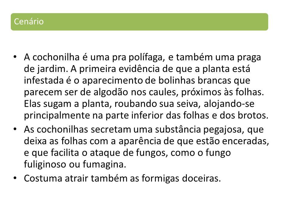 A cochonilha é uma pra polífaga, e também uma praga de jardim.