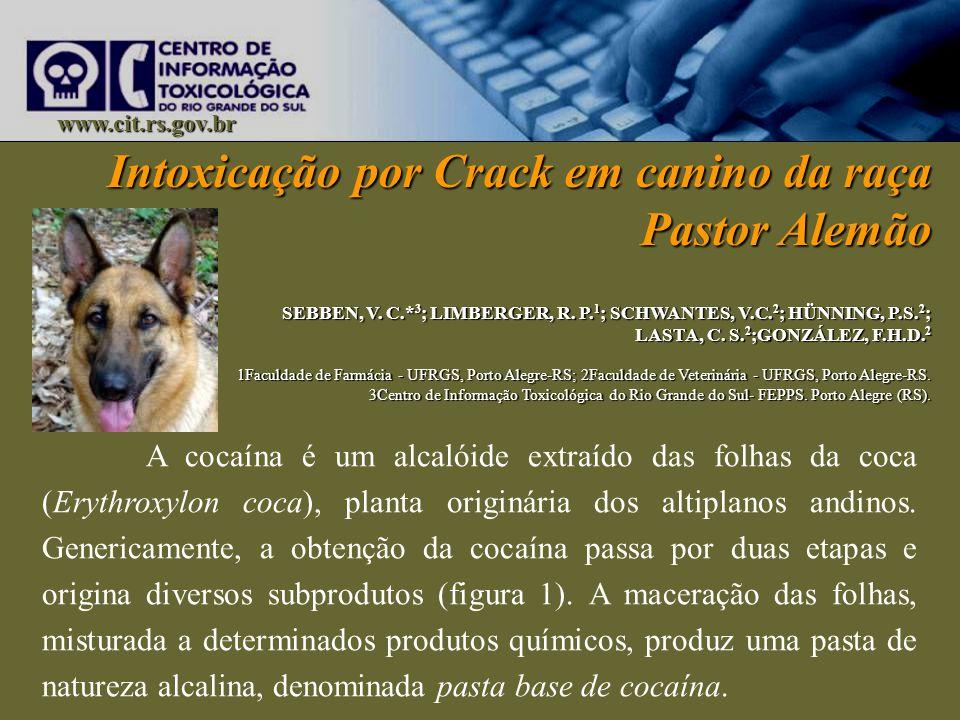 Intoxicação por Crack em canino da raça Pastor Alemão SEBBEN, V. C.* 3 ; LIMBERGER, R. P. 1 ; SCHWANTES, V.C. 2 ; HÜNNING, P.S. 2 ; LASTA, C. S. 2 ;GO