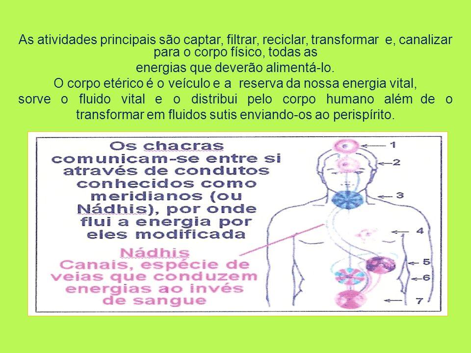 As atividades principais são captar, filtrar, reciclar, transformar e, canalizar para o corpo físico, todas as energias que deverão alimentá-lo. O cor