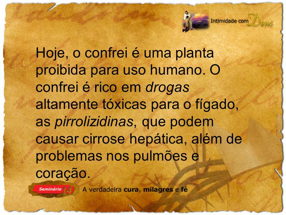 Hoje, o confrei é uma planta proibida para uso humano.