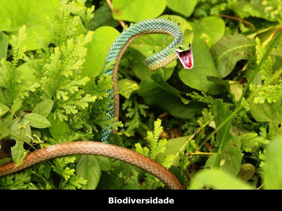 Bico de Papagaio – Riozinho do Anfrísio Biodiversidade