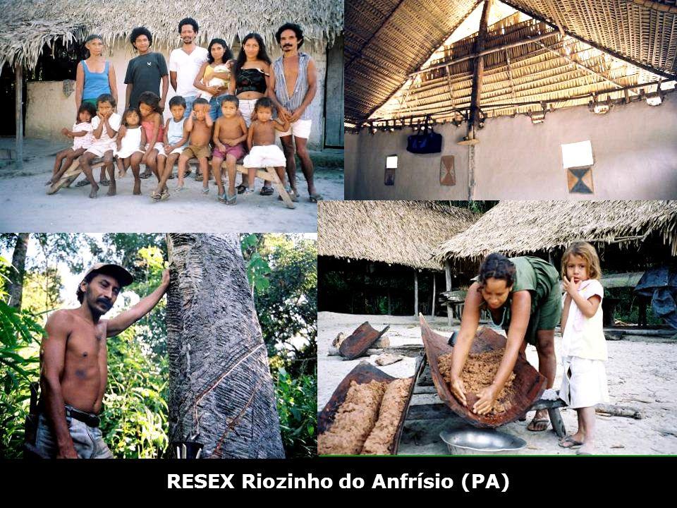Extração ilegal de Madeira EXTRA Ç ÃO MADEIREIRA – Riozinho do Anfr í sio