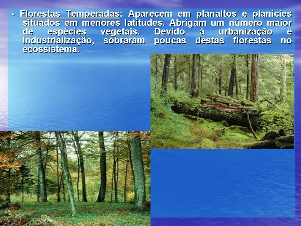 - Florestas Temperadas: Aparecem em planaltos e planícies situados em menores latitudes. Abrigam um número maior de espécies vegetais. Devido à urbani