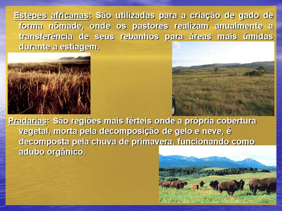 Estepes africanas: São utilizadas para a criação de gado de forma nômade, onde os pastores realizam anualmente a transferência de seus rebanhos para á