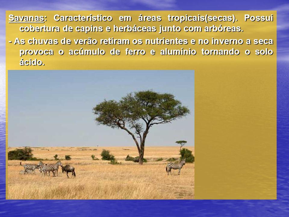 Savanas: Característico em áreas tropicais(secas). Possui cobertura de capins e herbáceas junto com arbóreas. - As chuvas de verão retiram os nutrient