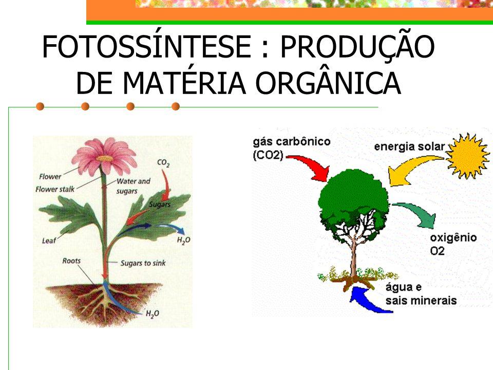 FOTOSSÍNTESE : PRODUÇÃO DE MATÉRIA ORGÂNICA