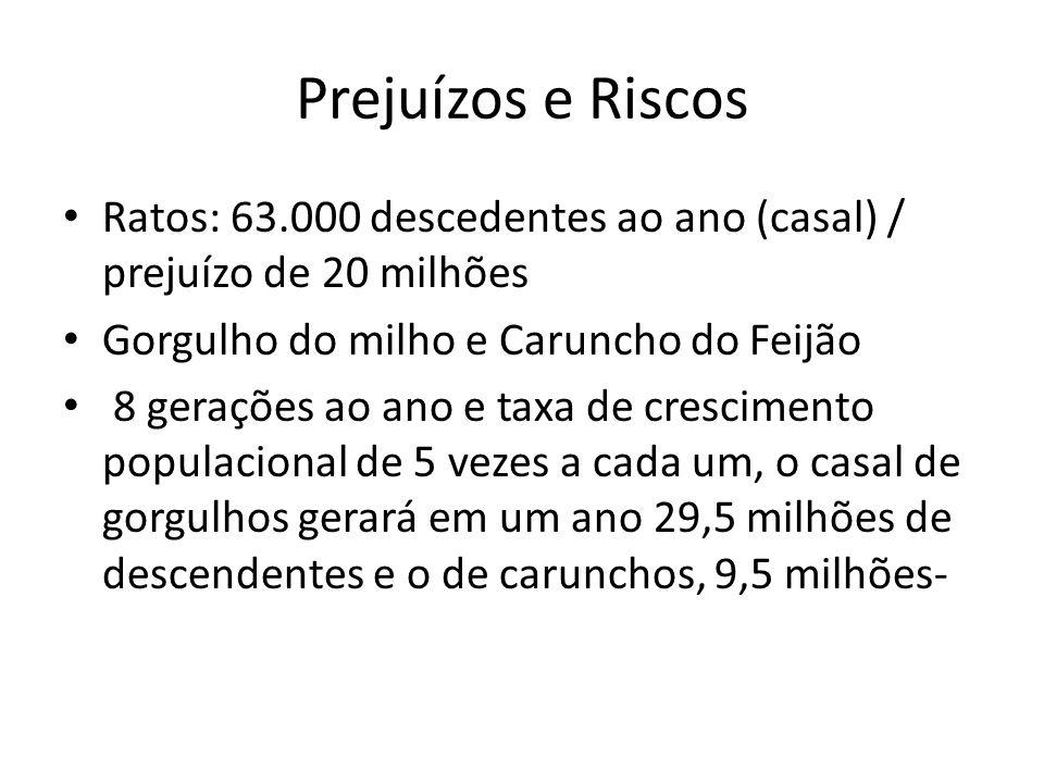 Prejuízos e Riscos Ratos: 63.000 descedentes ao ano (casal) / prejuízo de 20 milhões Gorgulho do milho e Caruncho do Feijão 8 gerações ao ano e taxa d