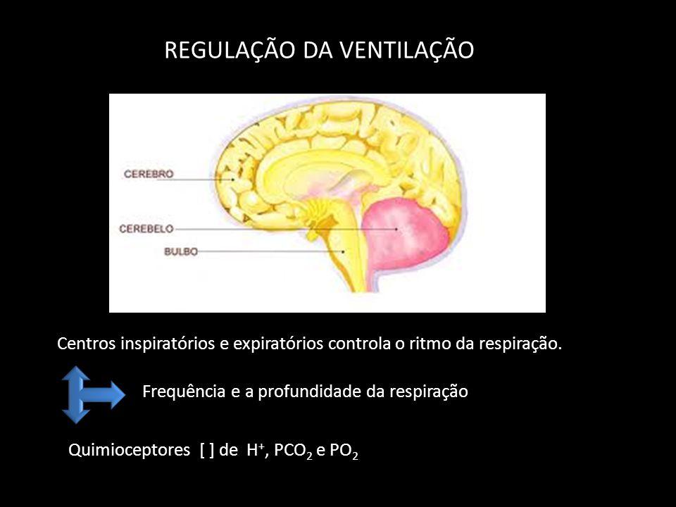 REGULAÇÃO DA VENTILAÇÃO Centros inspiratórios e expiratórios controla o ritmo da respiração. Frequência e a profundidade da respiração Quimioceptores