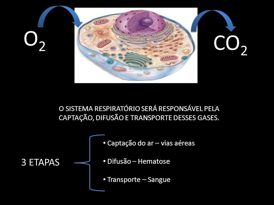 O2O2 CO 2 O SISTEMA RESPIRATÓRIO SERÁ RESPONSÁVEL PELA CAPTAÇÃO, DIFUSÃO E TRANSPORTE DESSES GASES. 3 ETAPAS Captação do ar – vias aéreas Difusão – He