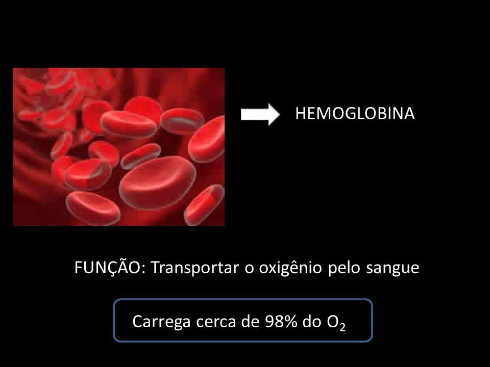 HEMOGLOBINA FUNÇÃO: Transportar o oxigênio pelo sangue Carrega cerca de 98% do O 2